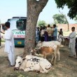 Payaam Relief Camp in Flood Areas Charsadda (42)
